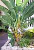 120320-flora-0011