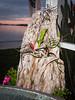 130109-orchids-0019