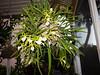 130109-orchids-0008