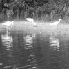 110116_paddling_0002