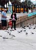 Little boy feeding the seagulls at New Smyrna Beach