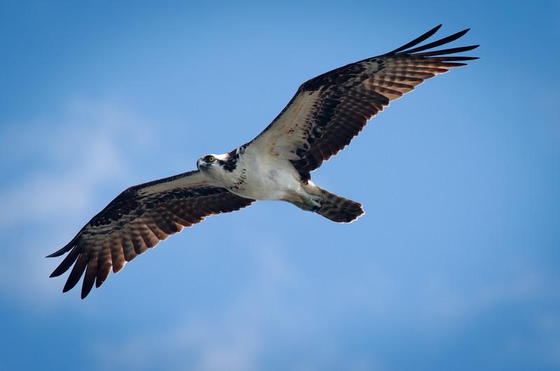 Osprey, Joan Durante Park