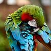 Parrot, Gaterland, Orlando, FL 1-2015