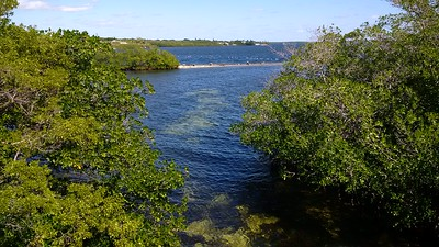 Overlooking the swimming hole at Pennekamp park. Clear, cold waters tucked amongst the mangroves.