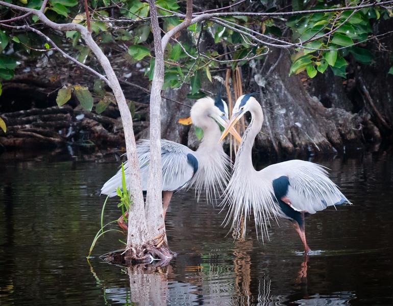 Heron Crossing. Wakodahatchee