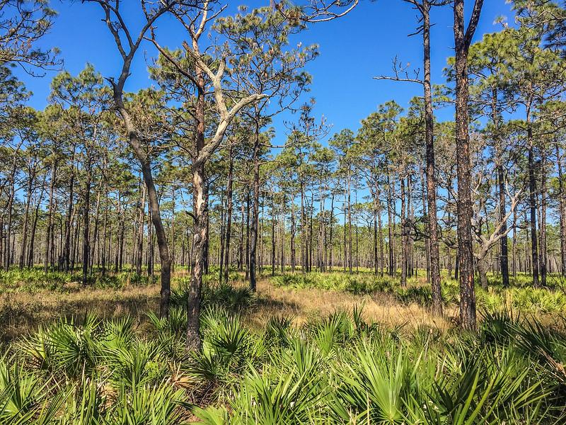 Florida-27.jpg