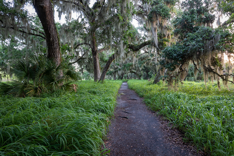 Canopied Trail
