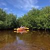 11/27/20 manatees an mangroves