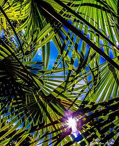 Noon Palms