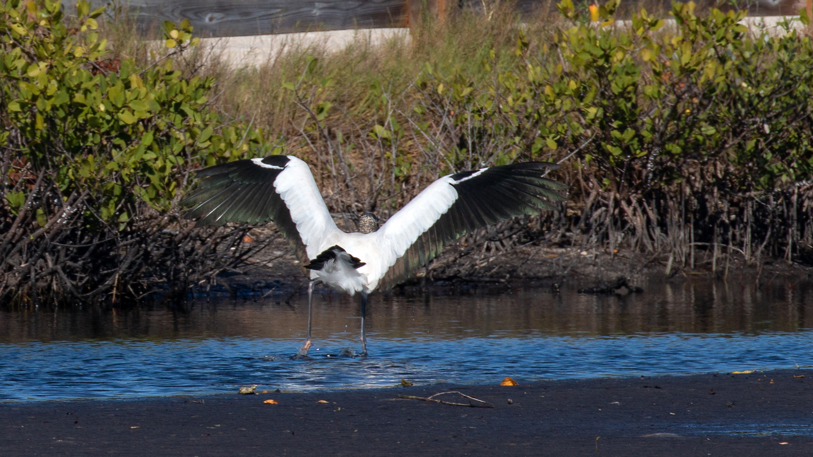 Photograph of Wood Stork