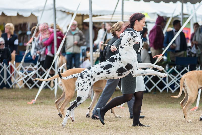 Florida Classic Dog Show Brooksville 2018