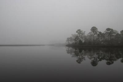 Marsh and Pine