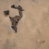 Vertebral Driftwood