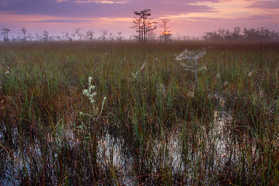 Pinelands Sunrise Everglades National Park Florida