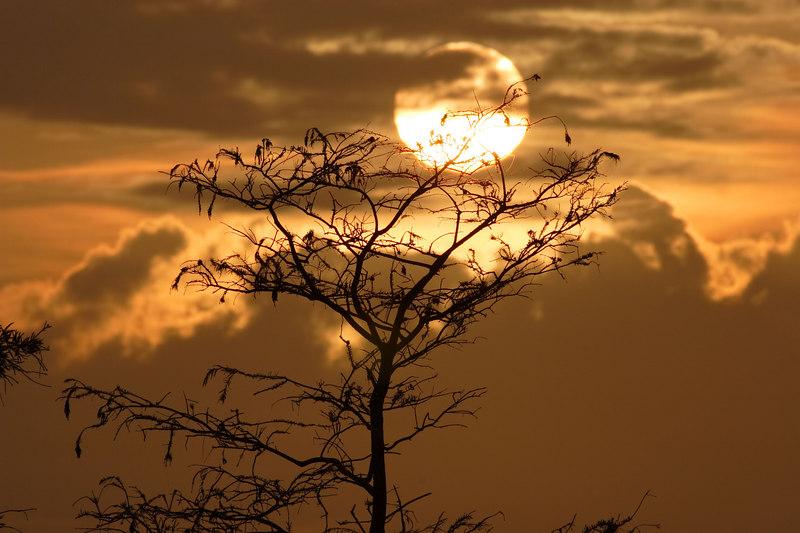 Morning Sun Everglades National Park Florida