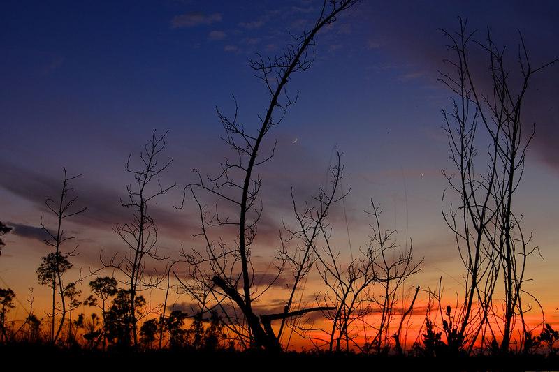 Dusk, Pine Glades Lake Everglades National Park Florida