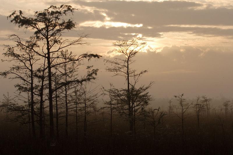 Misty Morning Everglades National Park Florida