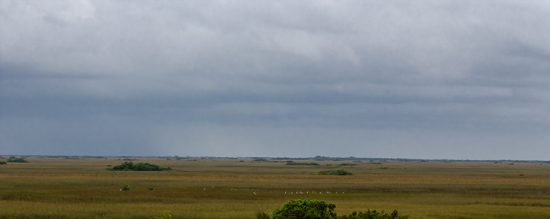 The Prairie (from the Observation Tower - Shark Valley)