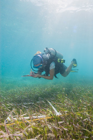 An FIU diver noting the abundance of seagrass inside the quadrate