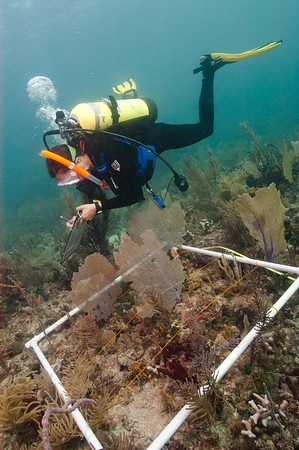 An NPS biological technician monitors benthic habitat in Biscayne National Park.