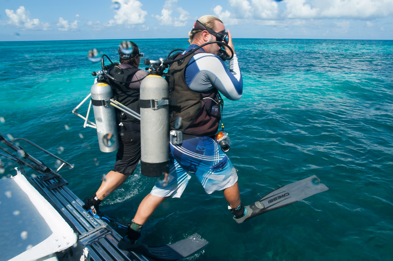Researchers from Florida International University jump in for a dive to study the see grass beds of the Dry Tortugas