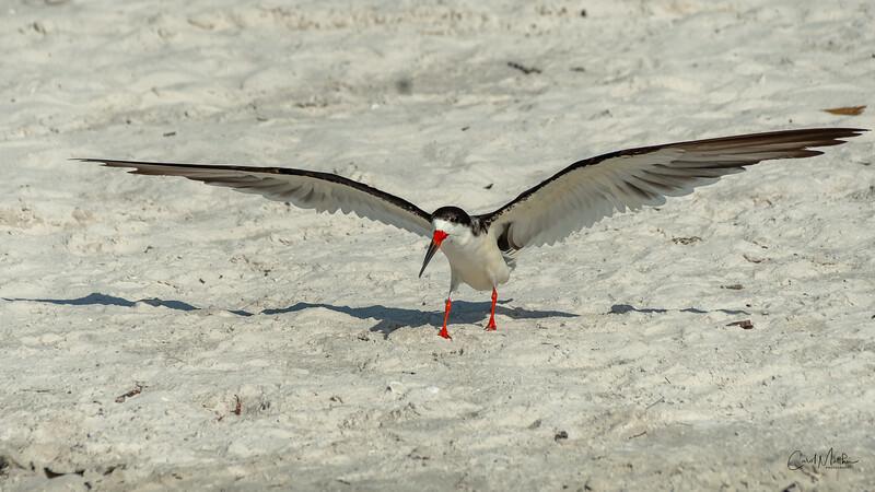 Skimmer sand-gliding-4