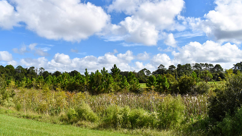 Marshy area with trees beyond