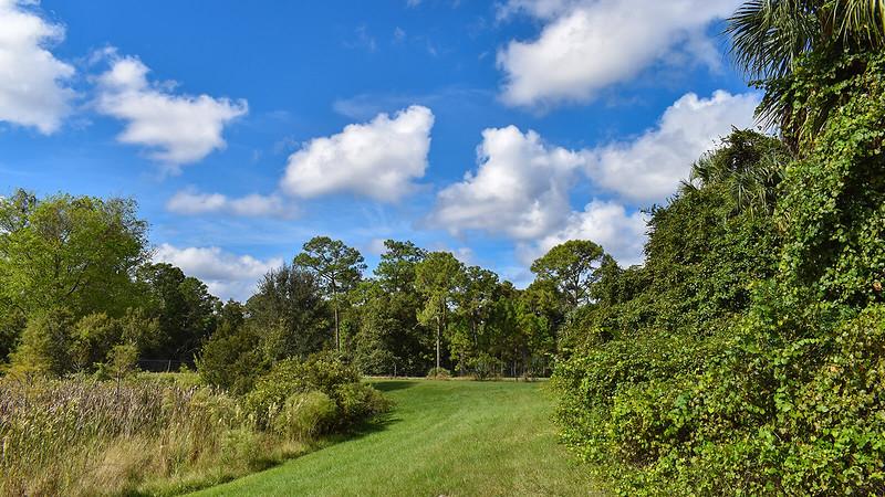 Grassy berm between marsh and trees