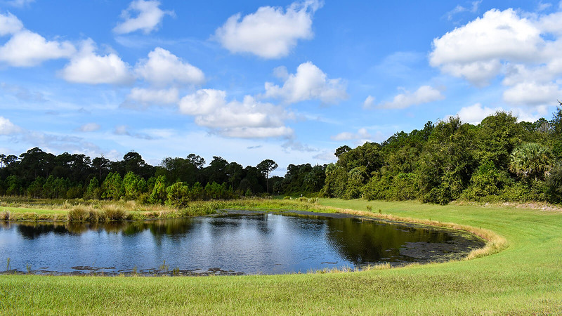 Blue skies over a large pond