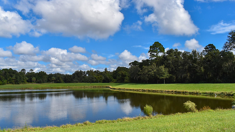 Great egret along edge of large pond