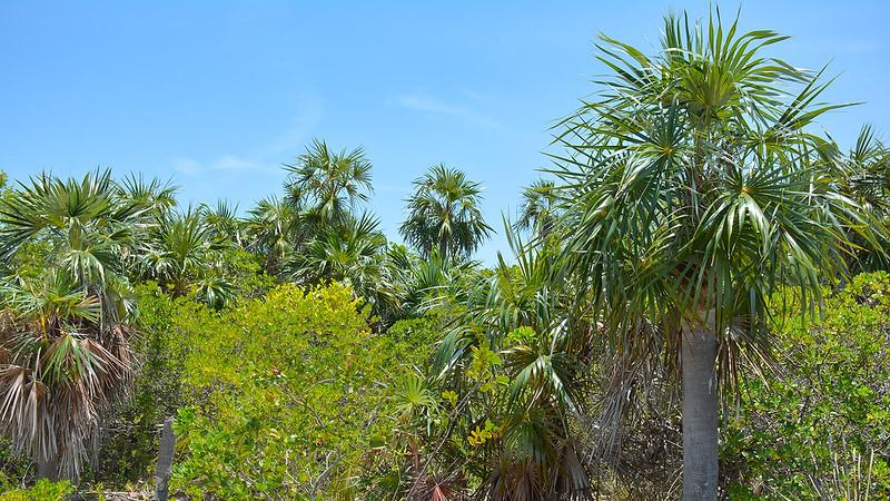 Silver palm hammock