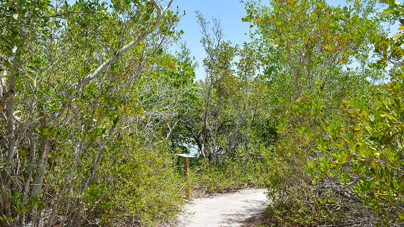 Trail past mangroves
