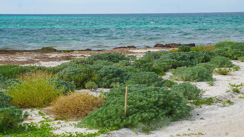 Low plants with aquamarine waves beyond