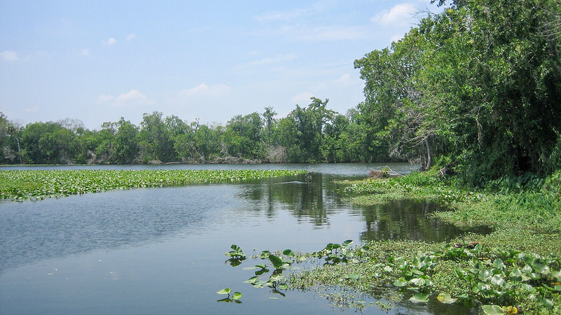 River view with aquatic plants