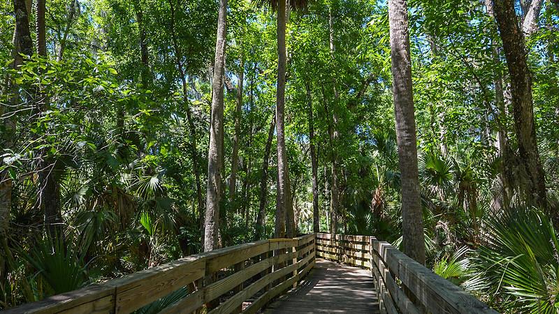Boardwalk in the palms