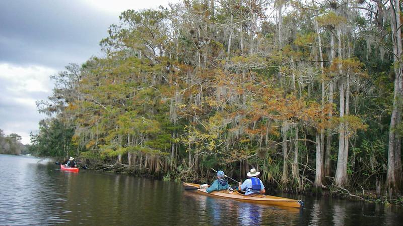 Kayakers along swampy shoreline