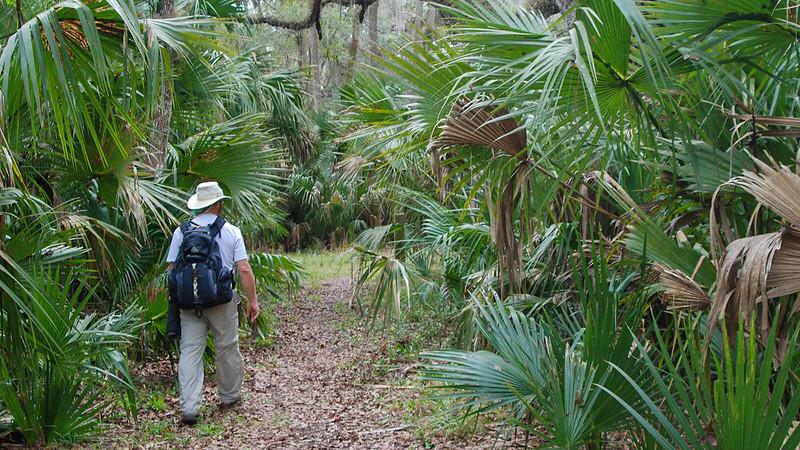 John hiking between cabbage palms