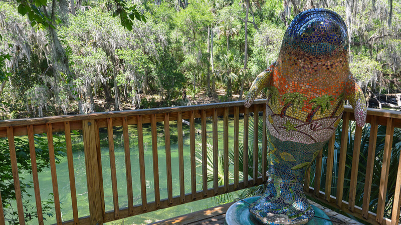 Manatee statue and spring run