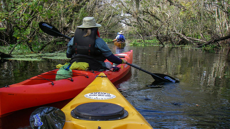 Paddlers under low tree canopy