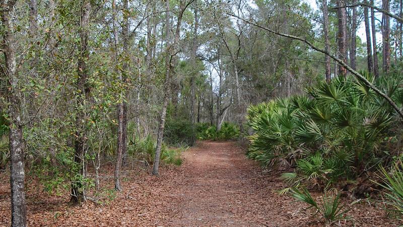 Path in oak forest
