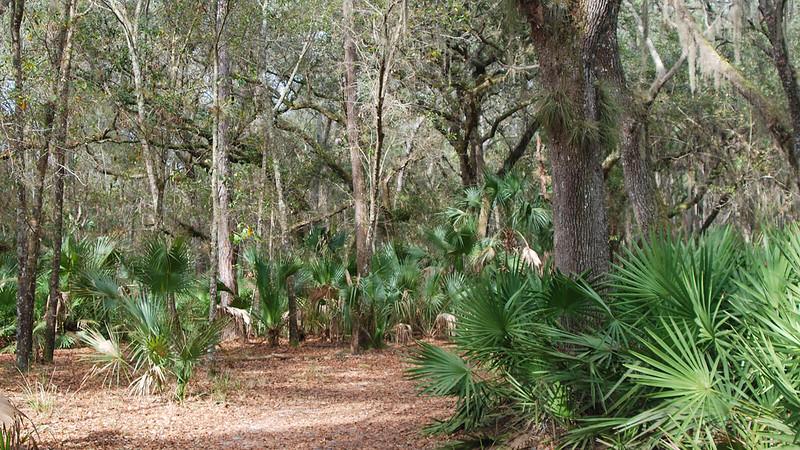 Oaks and palms