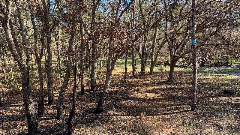Burned oak limbs and leaves