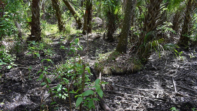 Drainage through hummocks