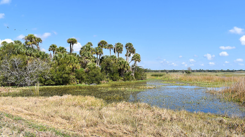 Palm island adjoining marsh