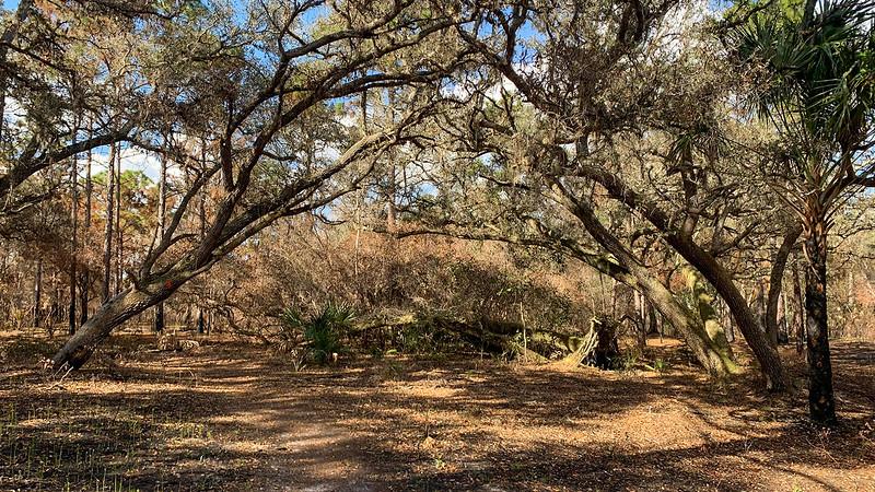 Crispy oaks