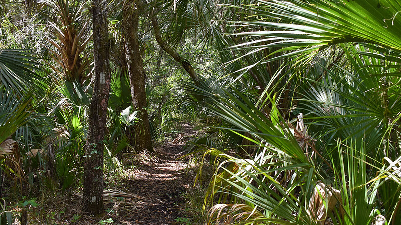 Narrow path between palms and oaks