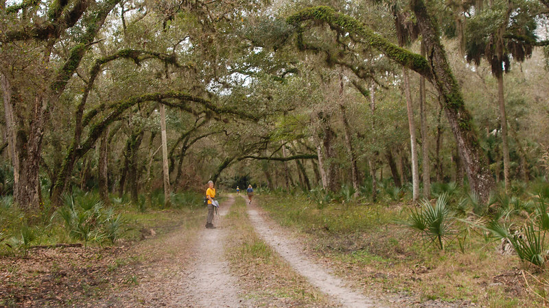 Equestrian trail with hikers under oaks