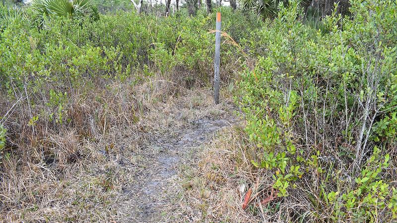 Blaze post in pine savanna
