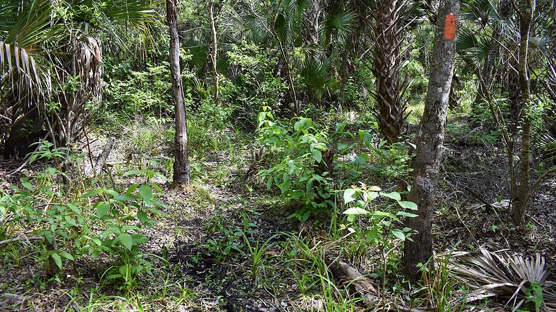 Trail in muddy area