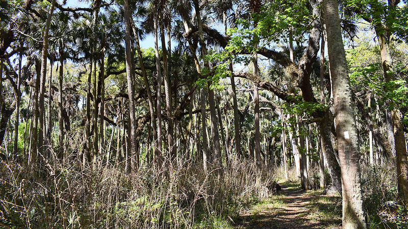 Dense understory of invasives